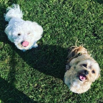 Chuck & Teddy