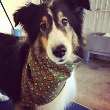 Sasha's ready for Christmas - are you??