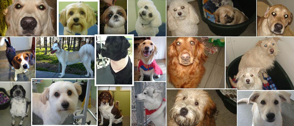Dog Kennels Windsor Ontario