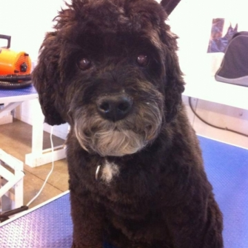 Student Groom of the Week - Xena!