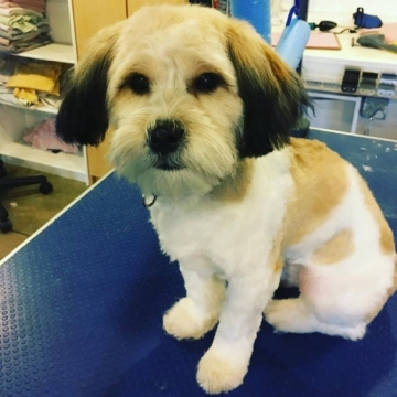 Bentley's first big boy haircut. Super wiggly, but look how handsome he is!