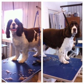 Wiggly Waggly Spaniels all over today in class!