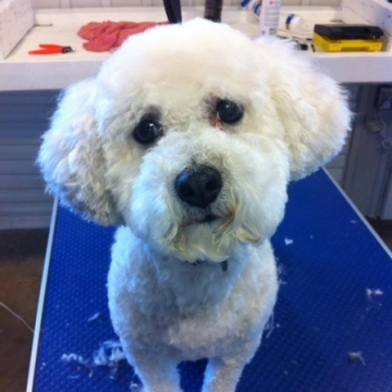Dog of the day - Daisy!