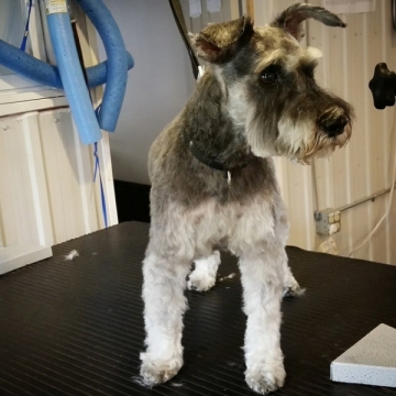 Fredie looks so tailored after his groom!
