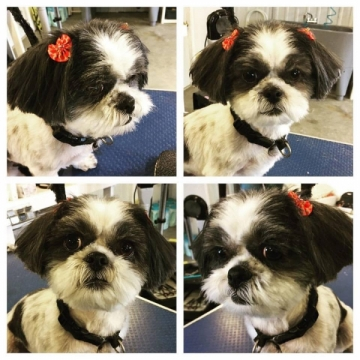 Maxy struck a lot of poses to show off her Christmas bows!