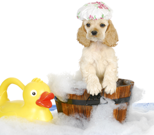 Dog Grooming Services Windsor Ontario