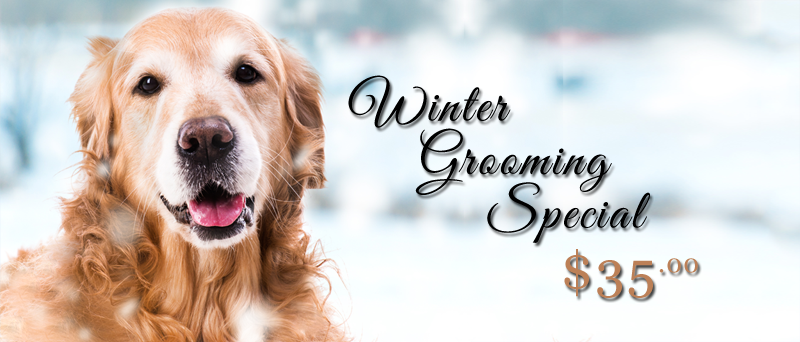 grooming-special-winter