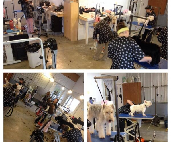 Terriers and spaniels for exams today! Busy busy!