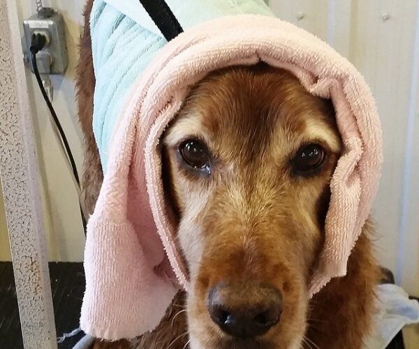 Dallas enjoyed her spa day!