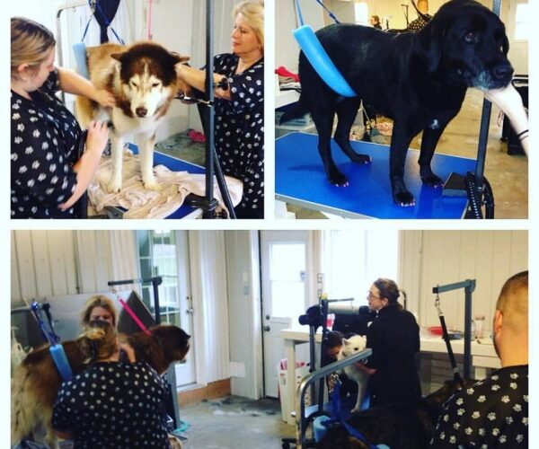 Lots of excitement happening today at our 2nd annual Charity Grooming day!