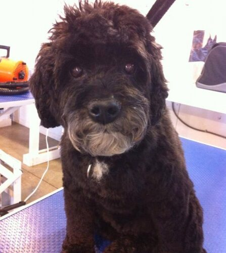 Student Groom of the Week – Xena!