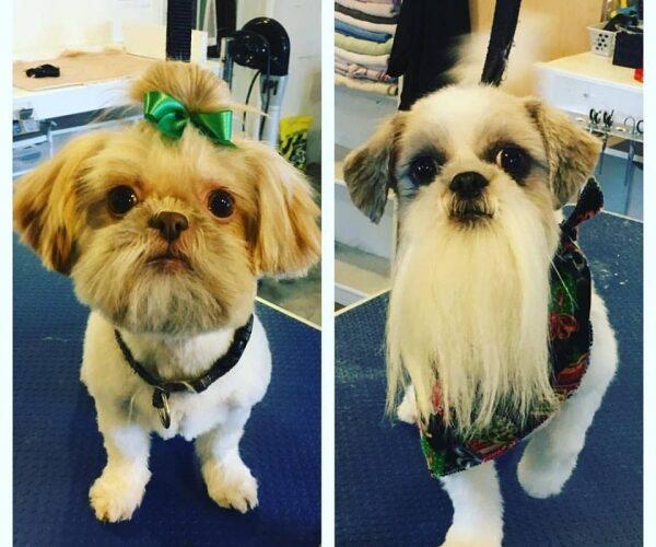 Merry Christmas Mia & Tito!!